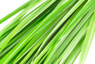 Lemongrass, Cymbopogon citratus