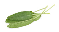 Sage, Salvia officinalis