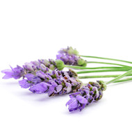 Lavender  AromaLotion 8oz