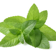 Pure Peppermint  AromaLotion 8oz