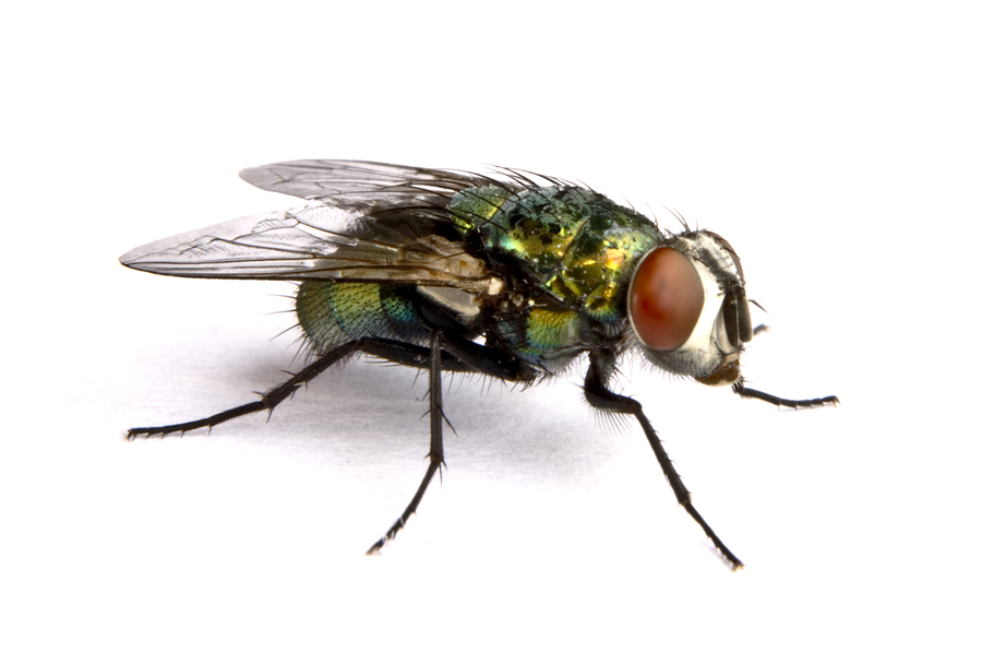 Flies Pest Control Products and Supplies