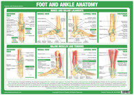 Foot & Ankle Anatomy