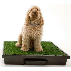 Petsafe PWM00-14498 Pet Loo Potty Training System - Medium
