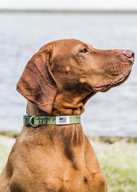 AR Dog Collar