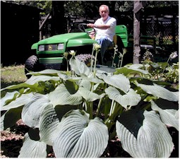 Ron behind Hosta Blue Angel