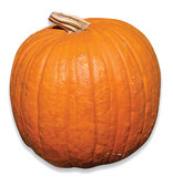 Medium Sized Pumpkins (available for in store pick-up only)