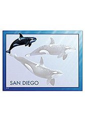 6 Pack Stick 'n Notes San Diego Killer Whales