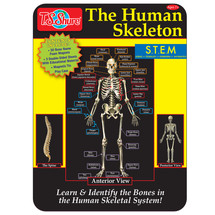 The Human Skeleton Magnetic Science Tin