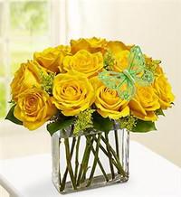 Modern Roses - One Dozen Yellow