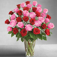 Ultimate Elegance 3 Dozen Long Stem Pink and Red Roses