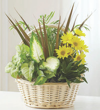Dish Garden With Fresh Cut Flowers