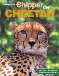 Adventures with Chipper the Cheetah