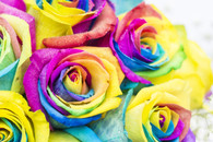 Half a dozen rainbow roses - FREE DELIVERY
