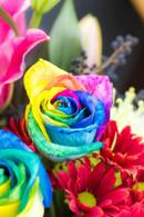 6 rainbow rose bonanza