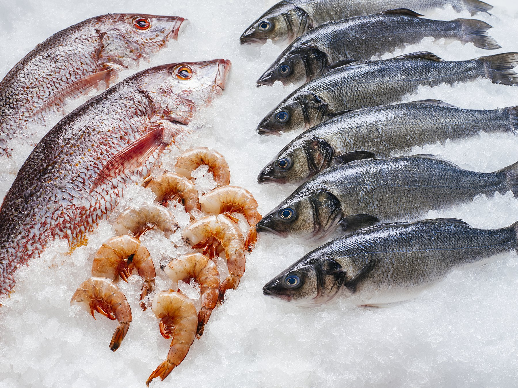 fish-00131.jpg