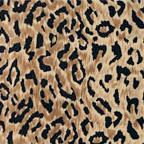 New Leopard