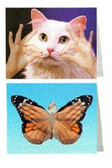 Butterfly & Cat Greeting Cards 8 pack