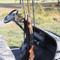 Golf Cart Gun Rack - Universal Fit (EZGO, Club Car,  Yamaha, & more)