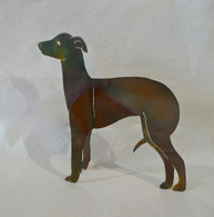 DAWN MICKEL Italian Greyhound