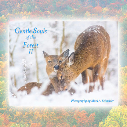 Front of Gentle Souls of the Forest II