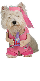 I Dream of Jeannie Pet Costume, Dogs Small