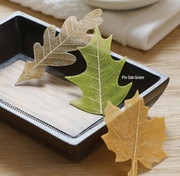 SoapLeaves Fall Designs Box of 20