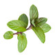 Pure Essential Oil - Peppermint