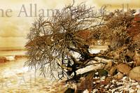 Autumn traditional
