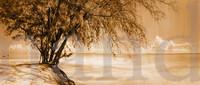 Whistling Pines , Anegada Sepia Panorama Traditional