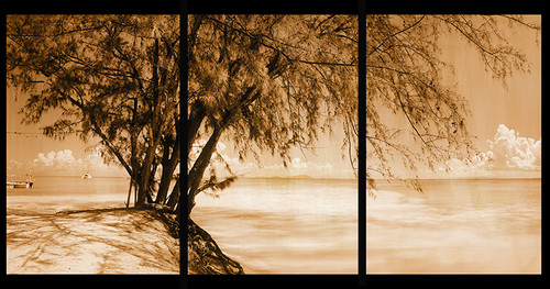 Whistling Pines Sepia