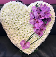Phalaenopsis Heart