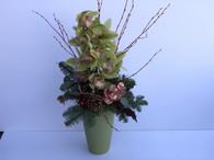 Christmas Cymbidium Orchid