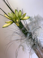 White Luxury amaryllis Design