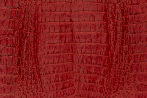 Caiman Skin