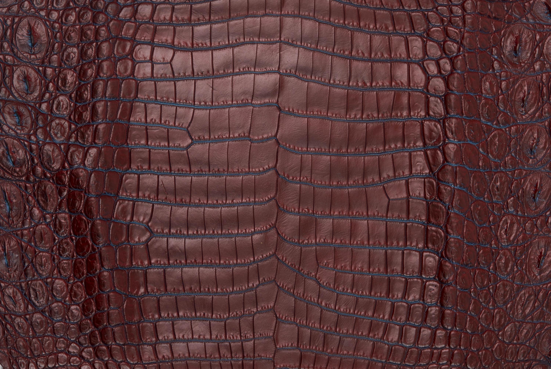 Nile Crocodile Skin