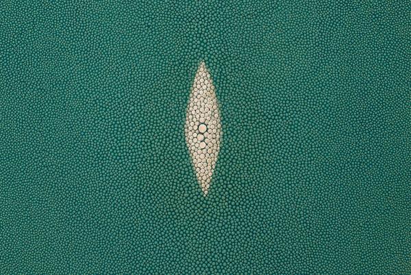 Stingray Skin