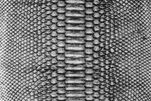 Python Skin Crisp Silver/Black
