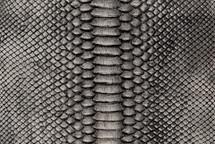 Python Skin Crisp Pewter/Black