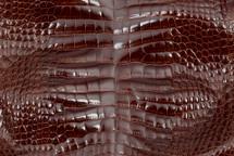 Alligator Skin Belly Glazed Cognac 25/29 cm Grade 4
