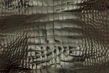 Alligator Skin Belly Glazed Brown 25/29 cm Grade 4