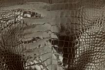 Alligator Skin Belly Glazed Taupe 25/29 cm Grade 4