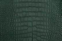 Alligator Skin Belly Matte Forest 30/34 cm Grade 4