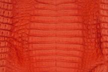 Caiman Skin Belly Matte Orange - XL