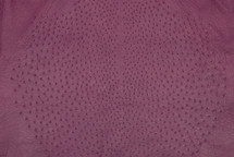 Ostrich Skin Matte Lilac