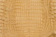 Caiman Skin Belly Matte Desert
