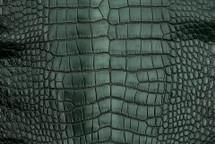 Alligator Skin Belly Vintage Forest 30/34 cm Grade 4