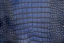 Alligator Skin Belly Vintage Cobalt 30/34 cm Grade 4