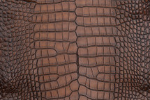 Alligator Skin Belly Vintage Cognac 65+ cm Grade 4