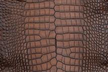 Alligator Skin Belly Vintage Cognac 65+ cm Grade 4
