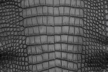 Alligator Skin Belly Vintage Grey 25/29 cm Grade 4
